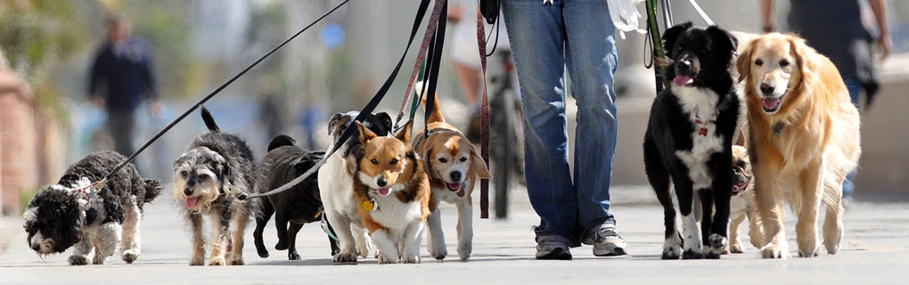 South Loop Pet Care takes care of a variety of pets and can handle any pet care situation!